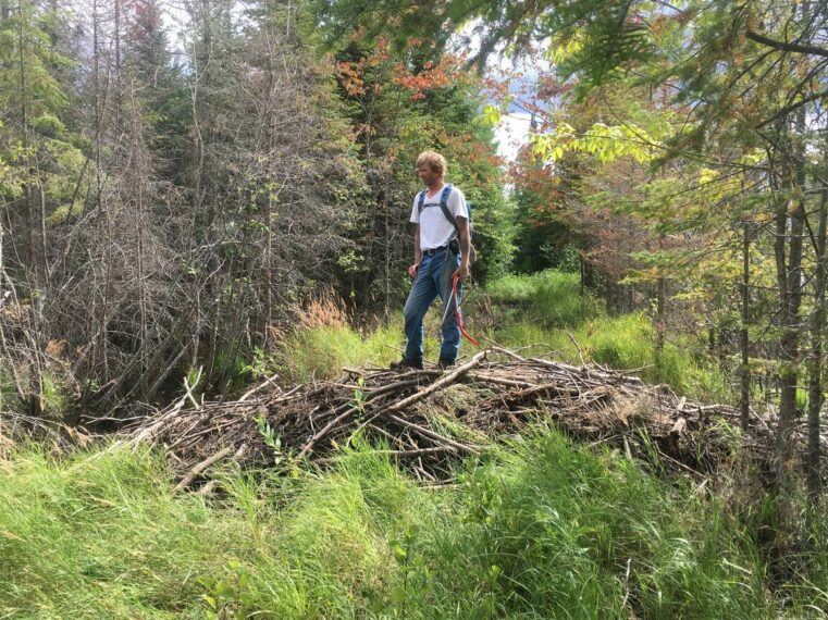 BEAVERS BUSY ON THE BANADAD, Poplar Creek and Canoe Outfitting